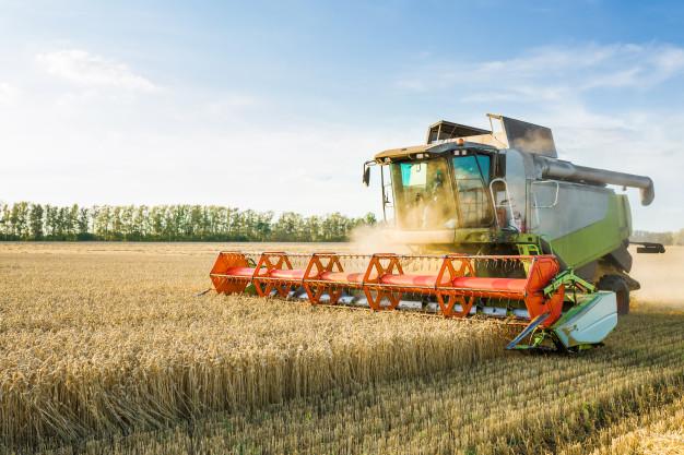 produkce, pěstování obilnin